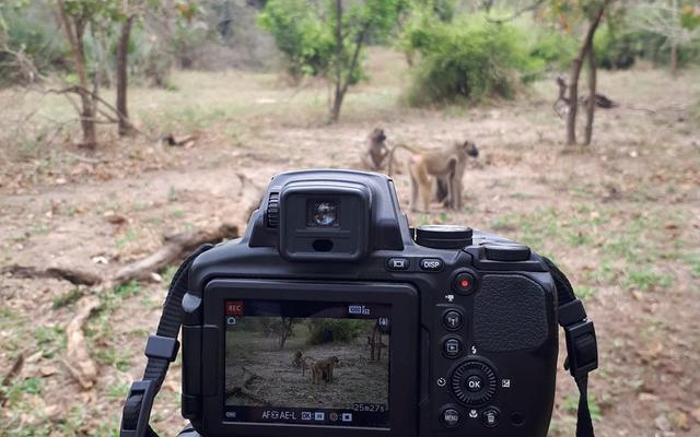 Filming of baboons in Gorongosa National Park, Mozambique (photo by Jana Muschinski)