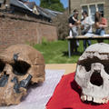 Fossil hominin skull casts of Homo rudolfensis (left) and Homo ergaster (right) used during an undergraduate Archaeology and Anthropology practical teaching session taught by Susana Carvalho and René Bobe in Trinity Term 2021, photo by Ian Cartwright