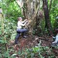 Katarina Almeida-Warren recording chimpanzee stone tool sites in Bossou Forest, Guinea Conakry