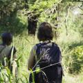 Following baboons in the woodland of Gorongosa
