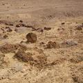Petrified forest from the Late Miocene, Lake Turkana Basin. Photo by René Bobe.