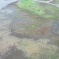 An aerial view of part of the Gorongosa National Park floodplain, showing a mosaic terrain being flown over by a flock of birds, taken during the Oxford-Gorongosa Paleo-Primate Field School 2018