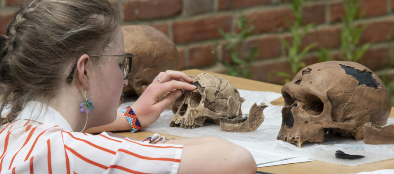 An undergraduate Archaeology and Anthropology student examining fossil hominin skull casts during a practical teaching session taught by Susana Carvalho and René Bobe in Trinity Term 2021, photo by Ian Cartwright
