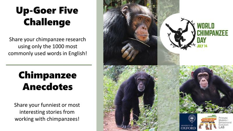 World Chimpanzee Day 14 July 2021 - Up-Goer Five Challenge (share your chimpanzee research using only the 1000 most commonly used words) and Chimpanzee Anecdotes (share your funniest or most interesting stories from working with chimpanzees)!