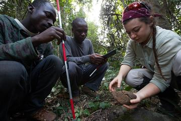 Research assistants Lawe Goigbe and Henry Camara with Katarina Almeida-Warren in a forest looking down at a stone used my chimpanzees for cracking nuts. Lawe holds a rod with red stripes whilst Henry holds a data collection tablet. Photo by Cyril Russo.