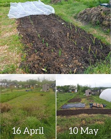 "Jana's non-academic activities - three images of Jana's allotment, one showing new shoots sprouting from tended soil, another showing the empty plot before cultivation on ""16 April"", and another showing vegetable beds and the progress made by ""10 May"""