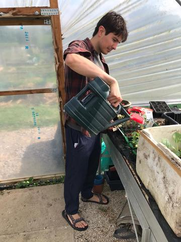 Thomas watering his plants inside a greenhouse at his allotment