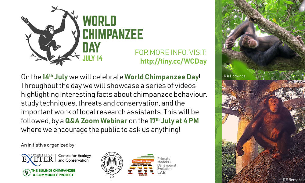 World Chimpanzee Day advertisement poster