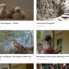 Some of the videos recently published by Gorongosa National Park on their Vimeo page