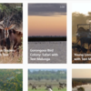 Gorongosa virtual safari experiences - freely available through the official Instagram page of Gorongosa National Park